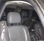 Bears in Car