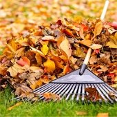Fall leaves composting
