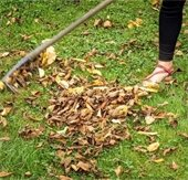 Fall raking leaves